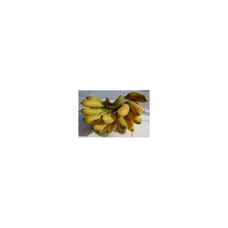 Silk Fig per lb