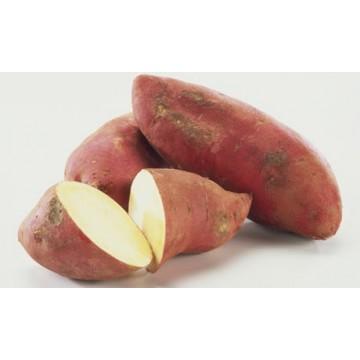 Sweet Potato per lb