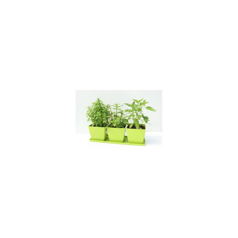 Herb Garden Trio Plants