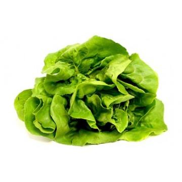 Lettuce (Butter Head)