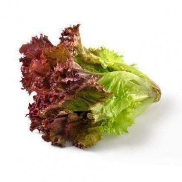 Lettuce (Summer Crisp)
