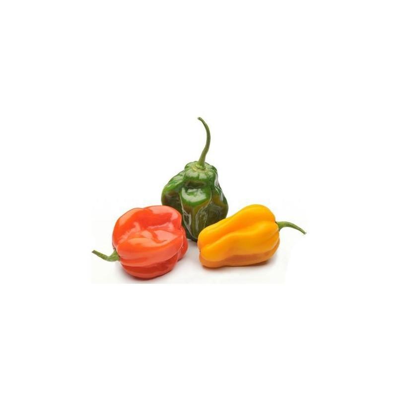 Hot Peppers (S. Bonnet) per unit
